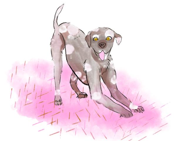kinder kinderboek kinderboeken tekenaar illustratie engels nederland hond honden rose pink dog happy illustration aumen aumenstudios illustrator watercolor pencil art fashion