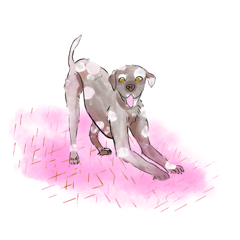 kinder kinderboek kinderboeken tekenaar illustratie engels nederland hond honden rose pink dog happy illustration aumen aumenstudios illustrator watercolor pencil art fashion