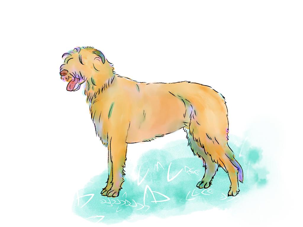 irish wolf hound hond honden dog green fashion colorful watercolor kinder kinderboek kinderboeken tekenaar illustratie engels nederland